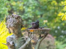 Bird Taking Bath In Fountain
