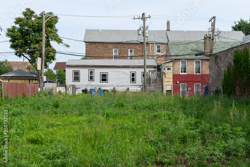 Vacant Lot with Overgrown Plants in Pilsen Chicago Slika na platnu