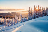 Fototapeta  - Impressive winter morning in Carpathian mountains with snow covered fir trees. Colorful outdoor scene, Happy New Year celebration concept. Artistic style post processed photo.