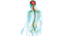 Human Central Nervous System W...