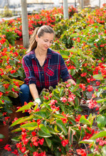 Female Florist Arranging Potted Begonias