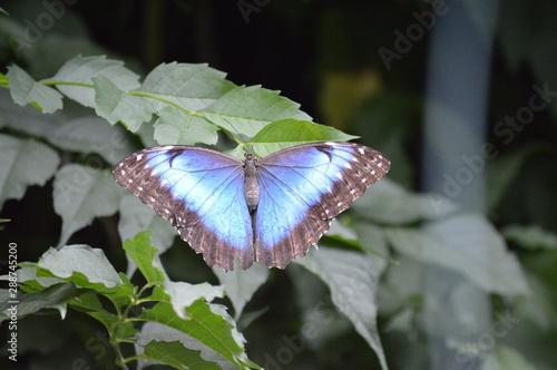 Deurstickers Vlinder Oasi di Sant'Alessio (PV)
