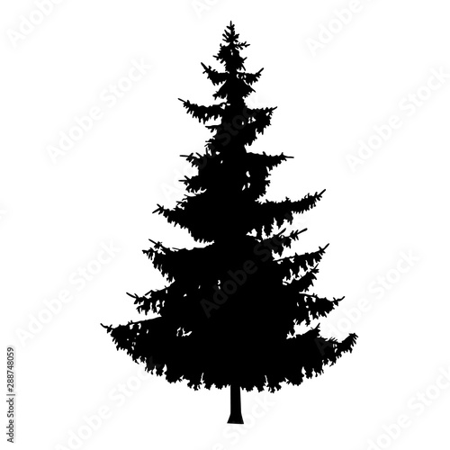 Photo  Silhouette of pine tree. Hand made.