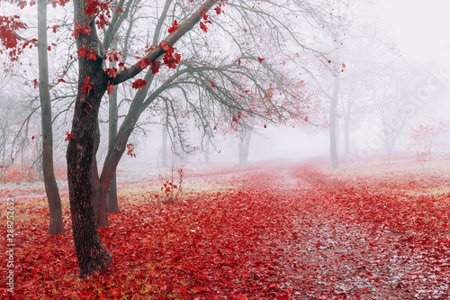 Blanc Scenic landscape in autumn foggy weather in park