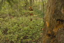 Brown Parts Of A Herbaceous Plant Hang On A Web Between Trees In A Forest. Great Background For Meditation.