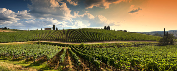 prekrasan vinograd u toskanskom selu na zalasku sunca s oblačnim nebom u Italiji.
