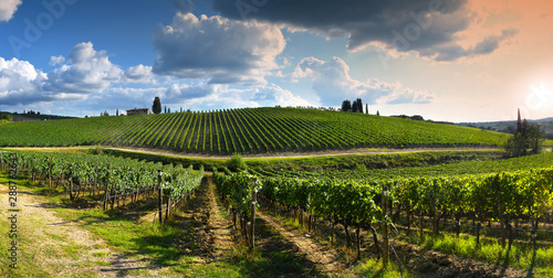 Tuinposter Wijngaard beautiful vineyard in tuscan countryside at sunset with cloudy sky in Italy.