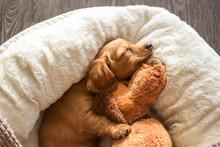 A Puppies Life