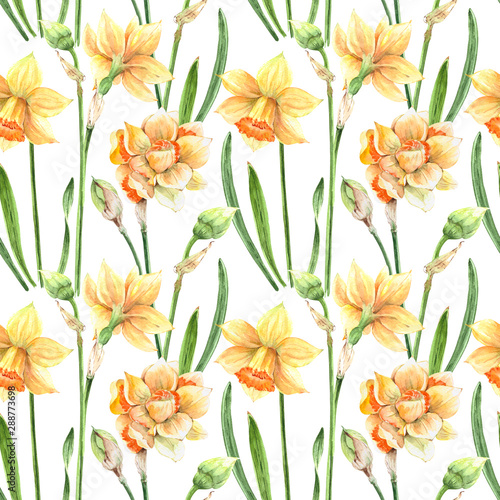 pattern yellow flowers daffodils on a white background Tableau sur Toile