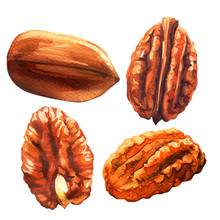 Tasty Pecan Nut, Whole Nuts In Skins And Pecan Halves Peeled, Dried Pecans Set, Close Up, Isolated, Hand Drawn Watercolor Illustration On White Background