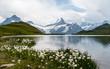 Bachalpsee in Grindelwald mit Eiger, Mönch und Jungfrau im Hintergrund und Wollblumen im Vordergrund