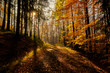 Beautiful and peaceful autumn scene, a road leading towards sun peaking through the trees. Leaves of many warm tones and colors, long shadows, haze and warmth. Pure nature, clean and amazing.