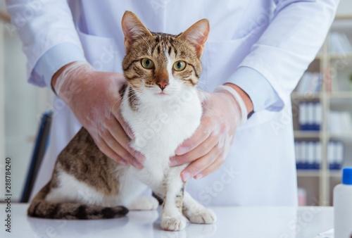 mata magnetyczna Cat visiting vet for regular checkup