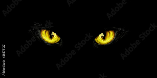 Black cat's yellow eyes on black background Canvas Print
