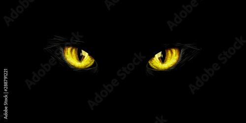 Fényképezés  Black cat's yellow eyes on black background