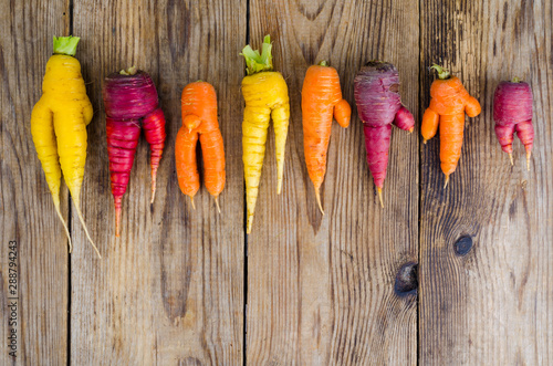Fotografija Ugly, deformed fresh organic carrots different color