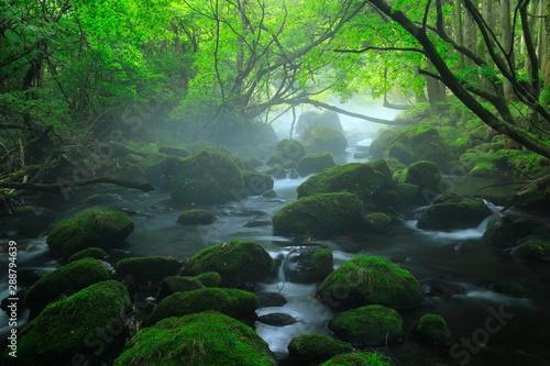 Canvas Prints Forest river 夏の元滝伏流水