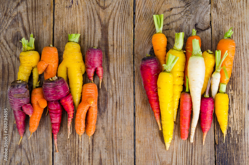 Ugly, deformed fresh organic carrots different color Fototapeta