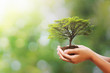 Leinwanddruck Bild - hand holding tree on blur green nature background. concept eco earth day