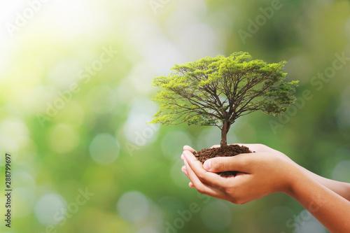 Fotografía  hand holding tree on blur green nature background