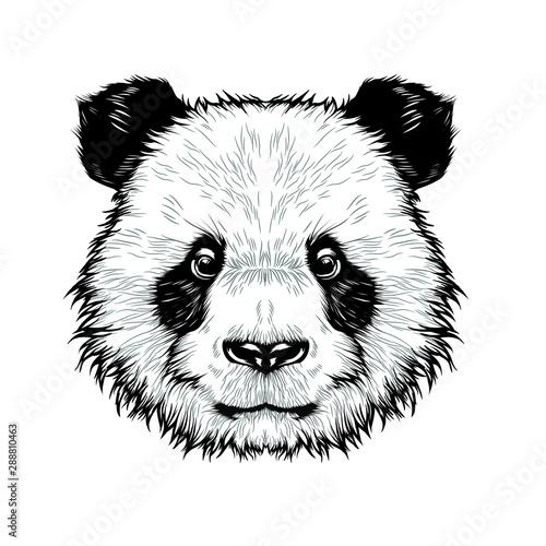 Foto op Canvas Hand getrokken schets van dieren Cute panda head