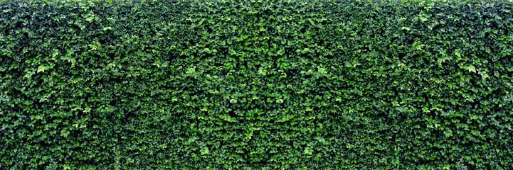 Fototapetagreen leaves panoramic background