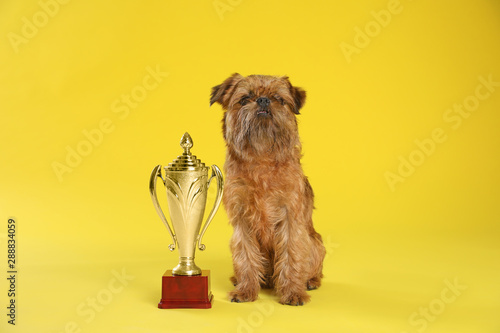 Cute Brussels Griffon dog with champion trophy on yellow background Tapéta, Fotótapéta
