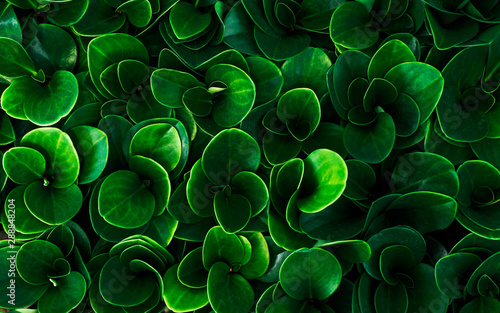 Green leaves pattern in nature. Abstract background.
