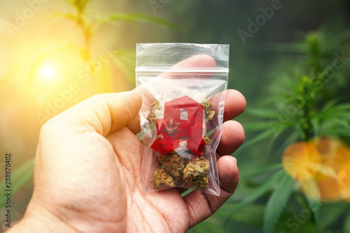 Foto auf AluDibond Logo Hand showing Cannabis buds in a plastic bag with drugstore sign. Concept of herbal alternative medicine, cbd oil, pharmaceutical industry or illegal drug use