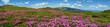 Leinwanddruck Bild - Blossoming slopes (rhododendron flowers ) of Carpathian mountains.