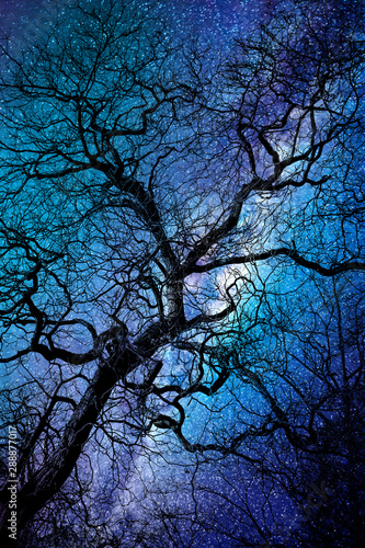 Valokuva Silhouette of a twisted tree in winter, starry night, halloween background