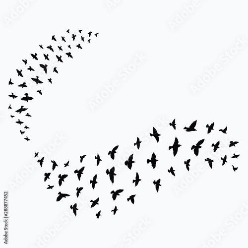 Valokuva  Silhouette of a flock of birds