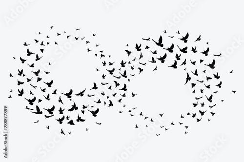 Valokuvatapetti Silhouette of a flock of birds