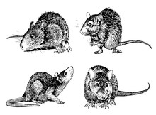 Graphical Set Of Rats Isolated...