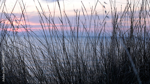 Papiers peints Lilas Ears of grass in the foreground, behind a beautiful blue and pink sunset sky, incredibly beautiful landscape