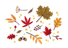 Autumn Foliage Hand Drawn Vect...