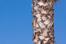 Palm Tree Trunk And Blue Sky