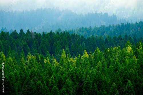 Keuken foto achterwand Bomen Stormy Forest in Mountains Clouds and Fog Weather
