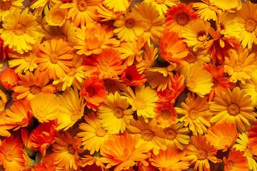 Calendula is a joyful flower. Yellow and orange calendula flowers as a backgr...