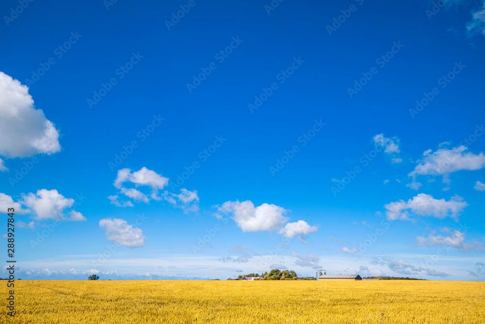 Fototapeta Farm in a countryside landscape with golden fields