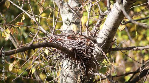 convolute nest on tree Canvas-taulu