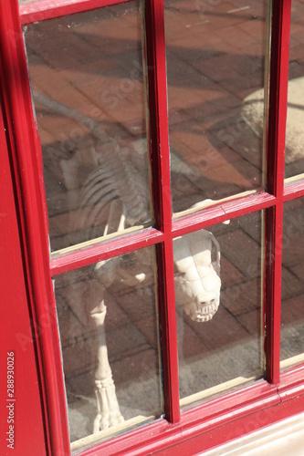 Dog Skeleton Statue Canvas-taulu