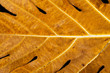 yellow leaf with blurry background