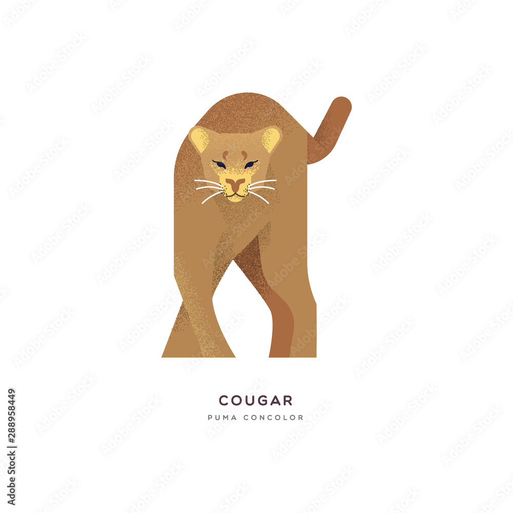 Fototapety, obrazy: Wild cougar cat isolated animal cartoon