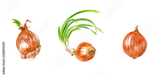 Three bright realistic red onion heads with young green shoots Canvas Print