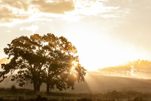 Morning Sun Creates A Starburst Through An Oak Tree With Hazy Hills In The Background.