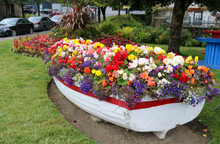Bright Flowers In The Garden. Flower Bed In The Boat.