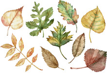Watercolor Illustration Of Autumn Leaves Isolated On The White Background. Fall Clipart.