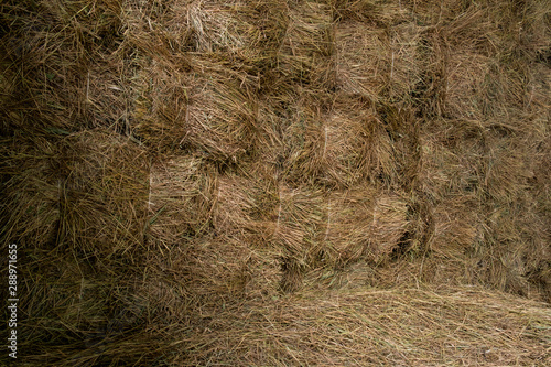 Stored hay bales wall  inside barn background. Canvas Print