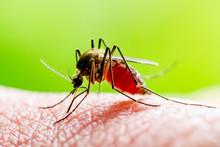 Dangerous Zika Infected Mosqui...